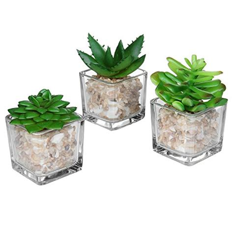home decor on sale top 5 best home decor plants for sale 2017 best gift tips