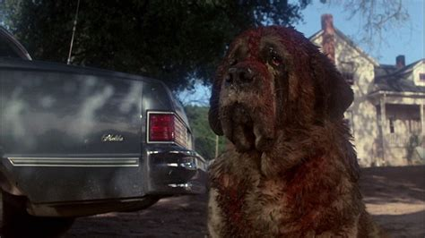 what of was cujo 5 cujo hd wallpapers backgrounds wallpaper abyss