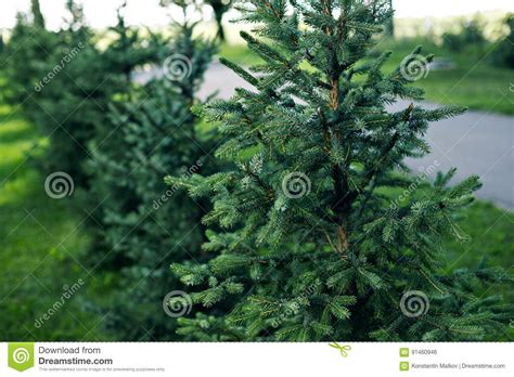 alberi per giardini piccoli piccoli alberi da giardino mekan info