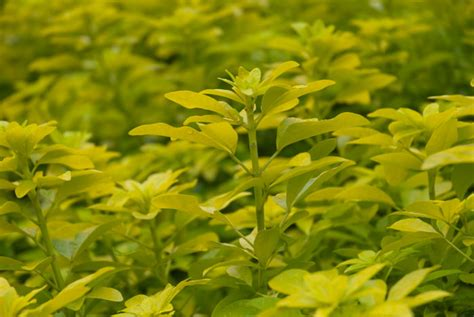 green shrub with yellow flowers yellow green plants pattern pictures