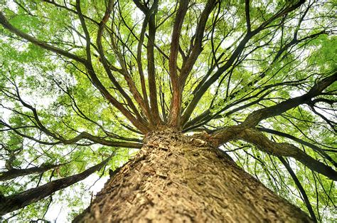 why the tree why do trees make air talking to your about god and
