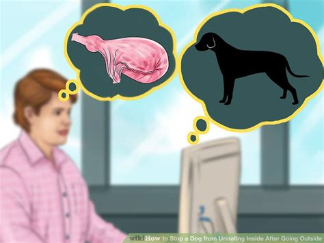 how to stop a dog from urinating in the house 3 ways to stop a dog from urinating inside after going outside