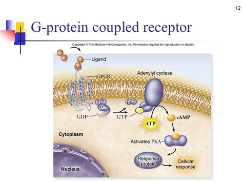 g protein coupled receptors signal transduction the process of converting