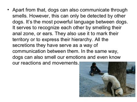how do dogs communicate about prairie dogs how do communicate with humans facts about