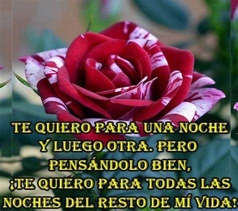 imagenes de amor y ternura para mi novia imagenes de rosas con frases de amor para mi novia rosas