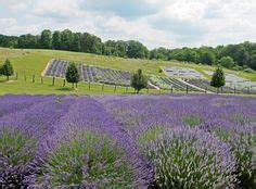 when is lavender in season in michigan 1000 images about boyne city michigan on