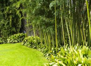 gartengestaltung mit bambus backyard privacy 10 best plants to grow bob vila