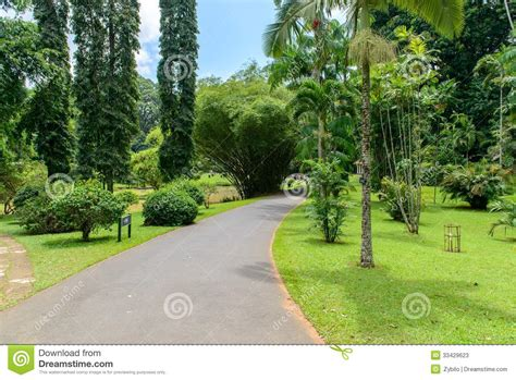 types of botanical gardens royal botanic gardens different types of trees stock