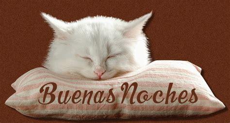 imagenes buenas noches de gatitos imagenes de gatos con frases de buenas noches