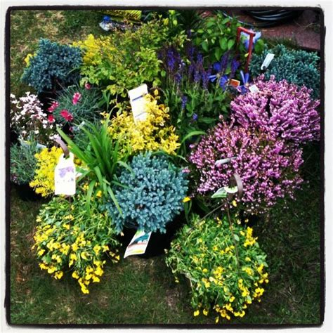 perennial garden plans zone 6 25 b 228 sta shade perennials id 233 erna p 229 perenner