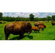 Woolaroc  Wildlife Preserve