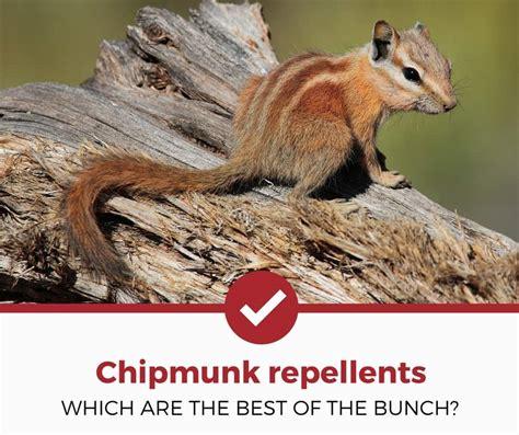top 5 best chipmunk repellents 2018 edition pest
