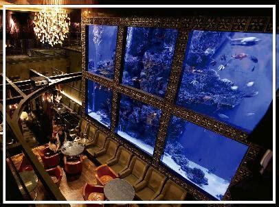 Lu Led Aquazonic aqua restaurant bar luxis イタリアンバー の求人情報 求人 飲食店