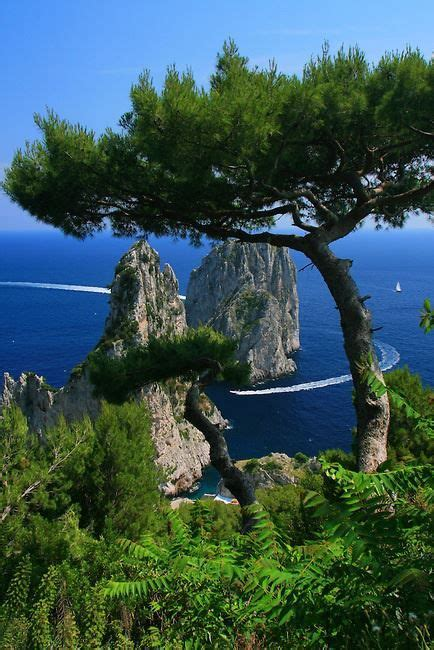cheap boat rentals naples italy 17 best images about garden oasis on pinterest pathways