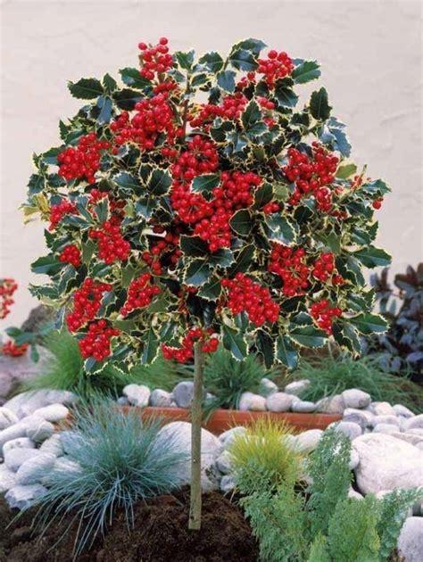 alberi ornamentali per giardino alberi da giardino sempreverdi alberi latifolie alberi
