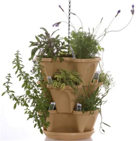 creating  container herb garden  home grown  farmers
