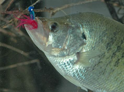 catch crappie   february    weather