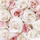 white-and-pink-roses-tumblr