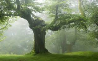 wallpaper of tree tree green forest nature wallpaper