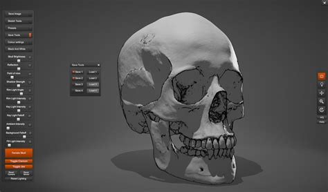 skull sketcher 2 anatomy 360