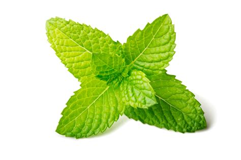 Mint Frozen Yogurt - Wholesale Frozen Yogurt Powder Mint Leaves Wallpaper