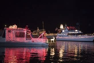 cape coral boat parade all about manatee season where to see sea cows