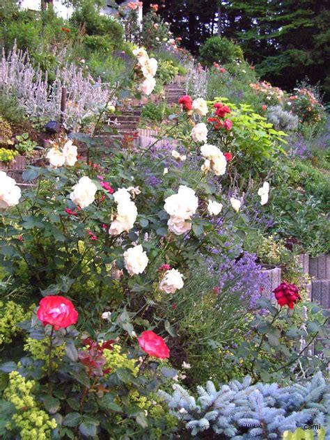 Pflanzen Am Hang by Pflanzen Am Hang Fallen Um Seite 2 Garten