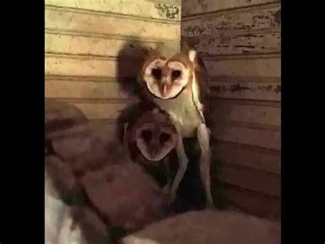 Texas Barn Owls Creepy Owls Scary Nightmares Texas Creatures Youtube