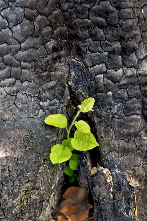 cool small palnts to grow the young green sapling growing out of charred stumps