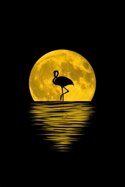 wallpaper flamingo silhouette moon reflection
