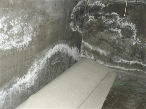 plaster basement walls efflorescence on plaster surface what why how