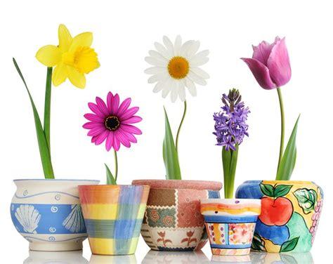 vasi terracotta colorati vasi di fiori composizioni di fiori variet 224 vasi di fiori