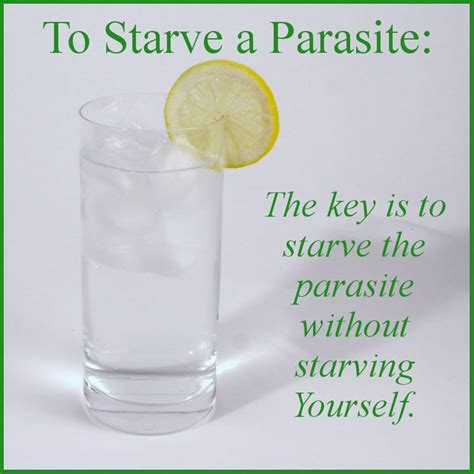 How To Detox Your From Parasites by 25 Best Ideas About Parasite Cleanse On
