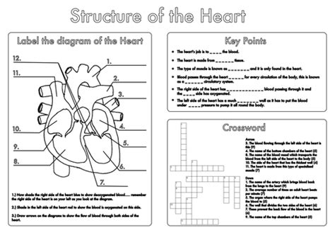 biology diagrams pdf gcse biology and lung structure worksheets by
