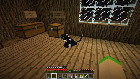 why does my sit on my minecraft why does my cat sit on chest cats