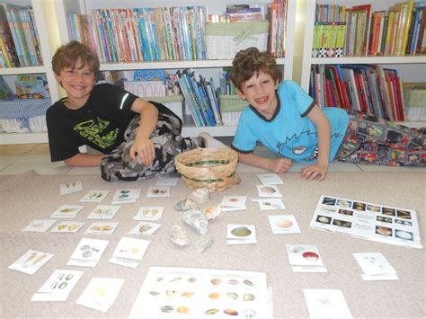How To Use A Shell Gift Card - shells shells and more shells natural beach living