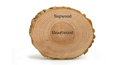 why is heartwood darker in color than sapwood why is heartwood darker in color than sapwood