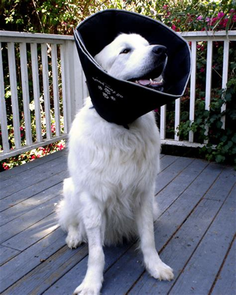 cone for dogs the writer s best cone elizabethan collar options
