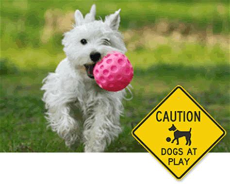 dogs at play pets dogs at play signs