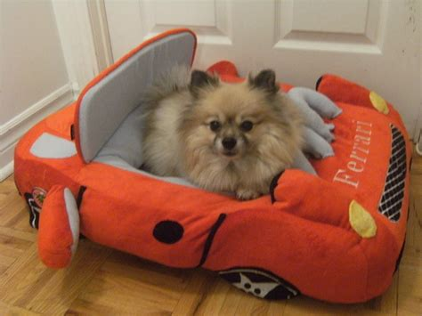 pomeranian bed 14 signs you are a pomeranian person