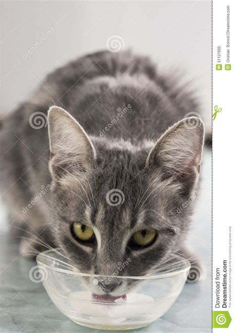 Cat Dreams Of Fish Birds Milk by Cat With Milk Stock Photo Image 51121605