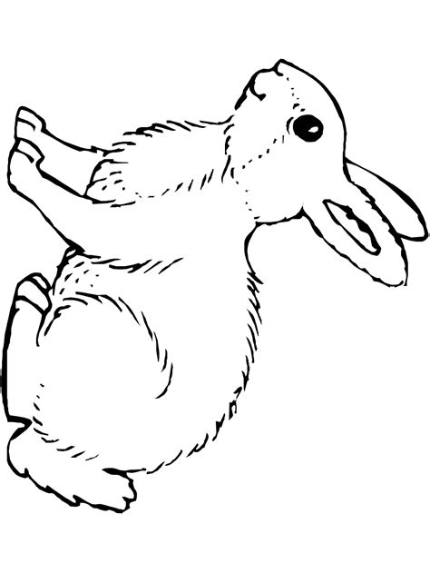 rabbit coloring pages pdf bunny rabbit coloring page printable spring coloring