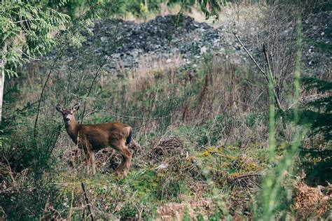 how to your to track deer pro trackercomparing the different methods of tracking deer pro tracker