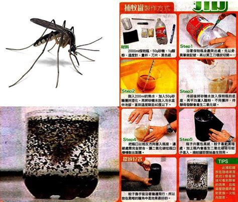 how to find mosquitoes in your room do it yourself home mosquito trap safety from disease begins at home