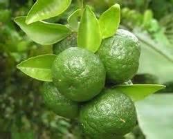 Sambal Pecel Jeruk Purut jeruk sambal bahasa indonesia ensiklopedia bebas