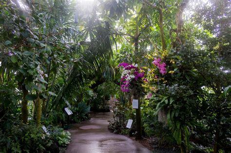 new york orchid show maria s orchids 2018 new york orchid show