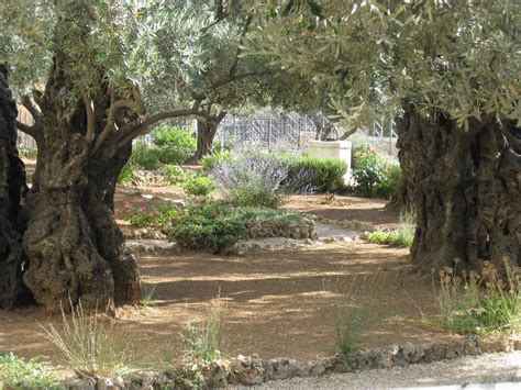 Garden Of by Simple Sweet Blessings The Garden Of Gethsemane