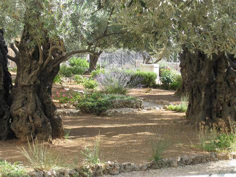 Garden Of Simple Sweet Blessings The Garden Of Gethsemane