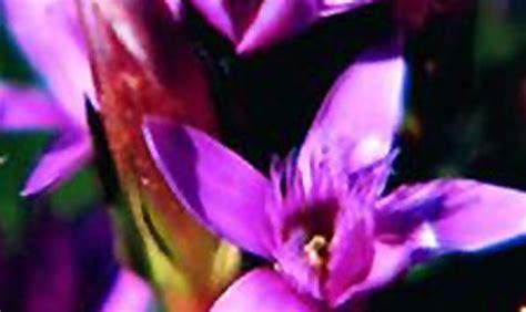 fiori riccione riccione arriva la floriterapia