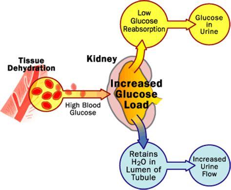insulin ineffectiveness  diabetes works howstuffworks
